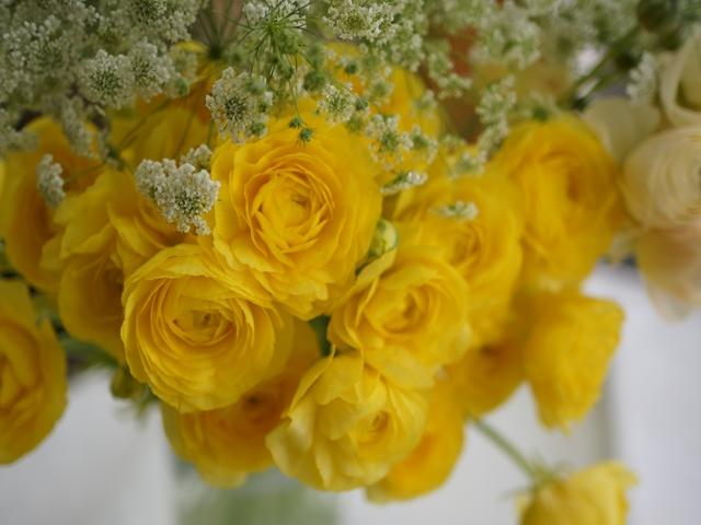 今週のお花 カラー
